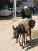 Weg zum Schafott (vor dem Opferfest)