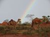 Kamele unter'm Regenbogen