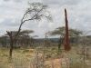 Termitenturm