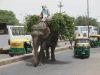 Ein Elefant, ein Elefant!