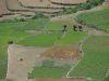 Terassenfelder bei Kausani/Uttaranchal