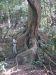 im Dschungel (Corcovado Nationalpark)