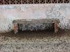 Grillen in Olmos