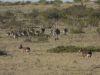 Nandu-Familie und Maras bzw. Großer Pampashase
